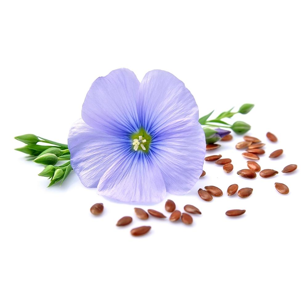 Semințe In